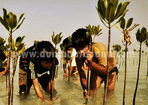 mangrove di pulau pari, pulau pari, dunia outbound