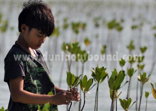 tanam mangrove, dunia outbound, pulau pari