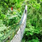 cikaniki, lokasi outbound di sukabumi, jembatan canopy