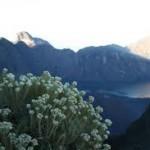 Artikel Dunia Outbound : Padang Edelweis Terbaik di Indonesia