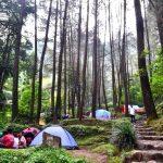 hutan pinus cilember, villa kayu curug cilember, outbound puncak, outbound satu hari